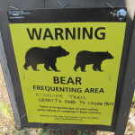 bear frequenting area montana